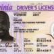 Sample VA License